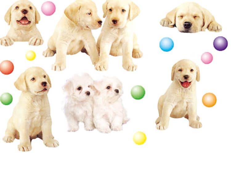 Стикери за стена Кученца